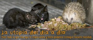 el_erizo_y_los_gatunos6